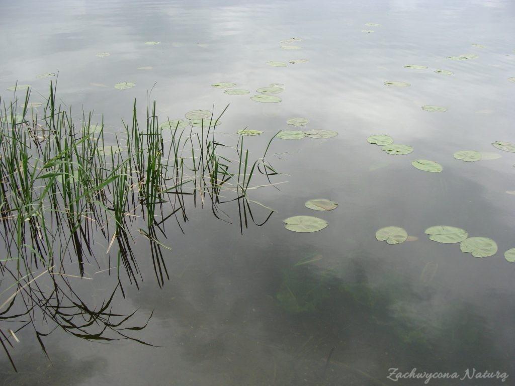 Jezioro Mamry -serce Mazur (52)