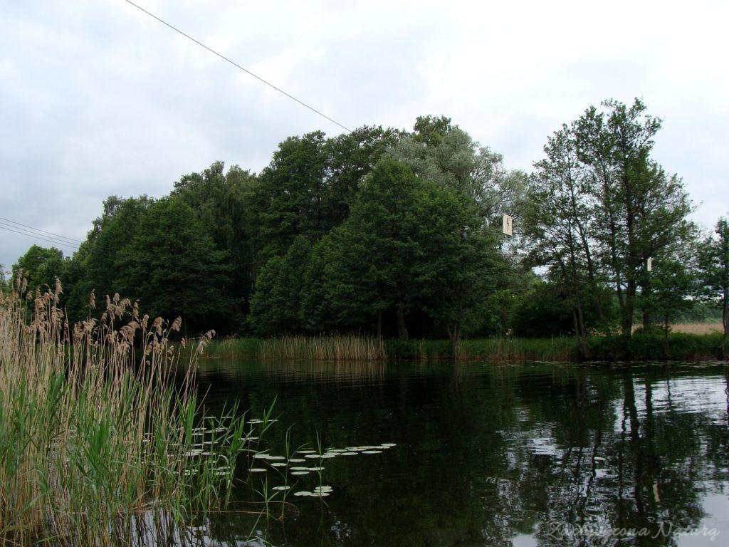Jezioro Mamry -serce Mazur (61)