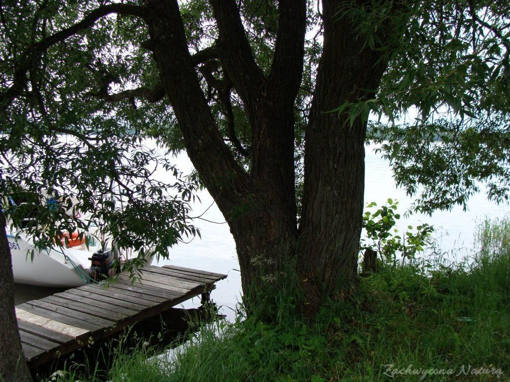 Jezioro Mamry -serce Mazur (62)