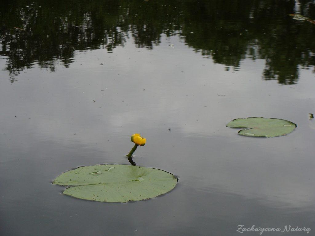 Jezioro Mamry -serce Mazur (73)
