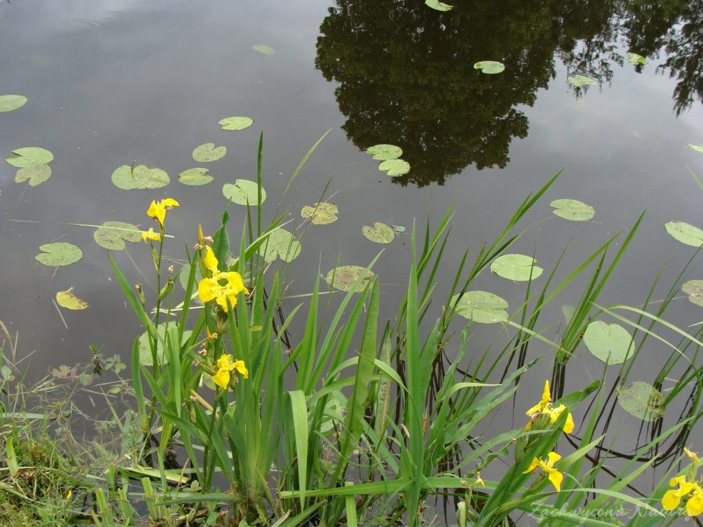 Jezioro Mamry -serce Mazur (74)