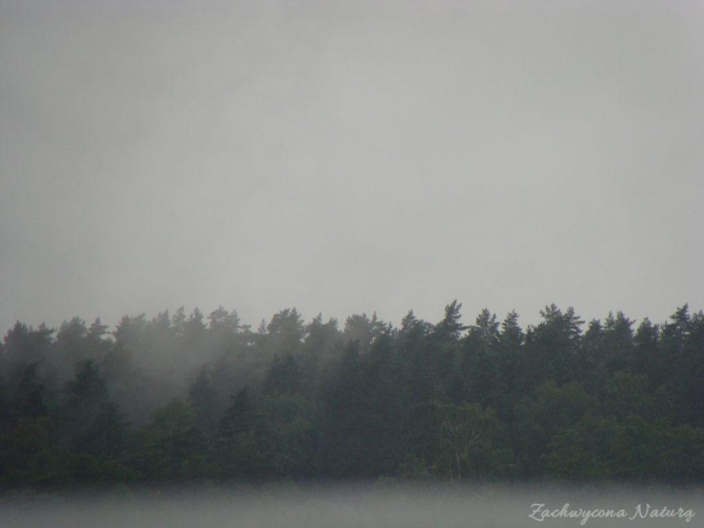 Jezioro Mamry -serce Mazur (87)