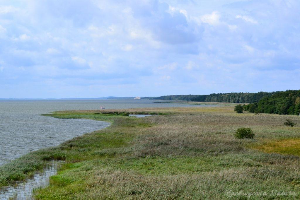 Ruchome wydmy w Słowińskim Parku Narodowym (5)