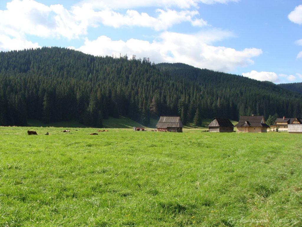 Idąc na Grzesia przez Dolinę Chochołowską (1)