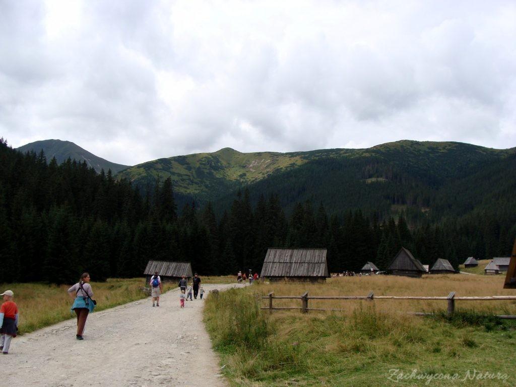 Idąc na Grzesia przez Dolinę Chochołowską (13)