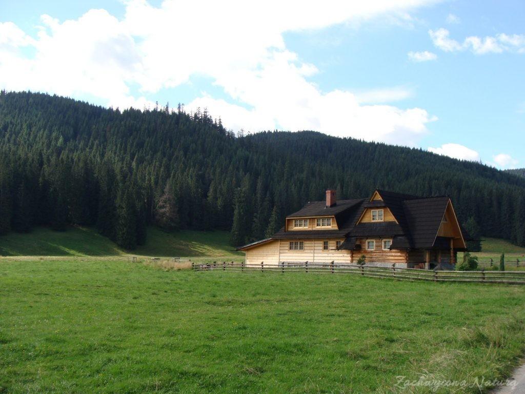 Idąc na Grzesia przez Dolinę Chochołowską (2)