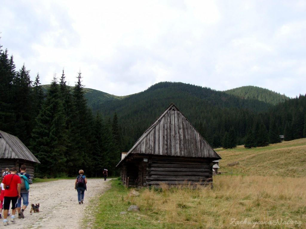 Idąc na Grzesia przez Dolinę Chochołowską (24)