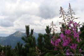 Idąc na Grzesia przez Dolinę Chochołowską (49)