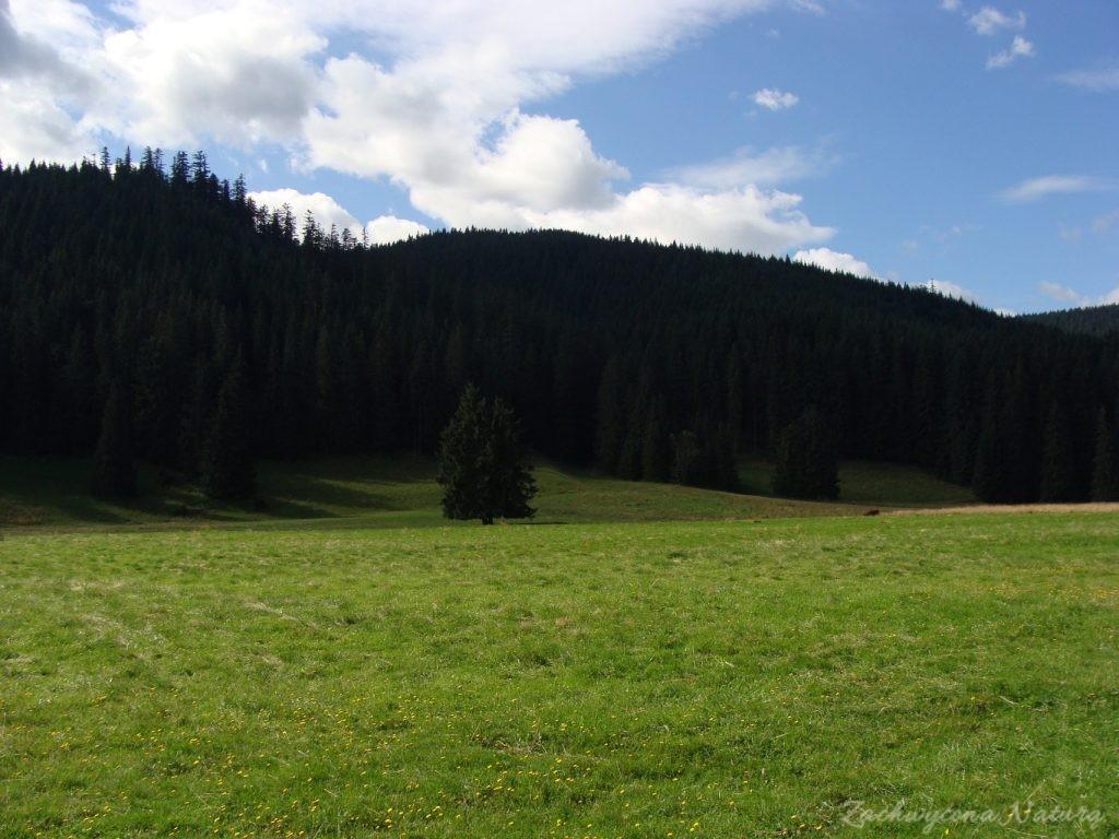 Idąc na Grzesia przez Dolinę Chochołowską (5)
