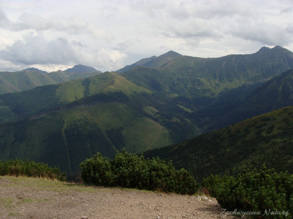 Idąc na Grzesia przez Dolinę Chochołowską (65)