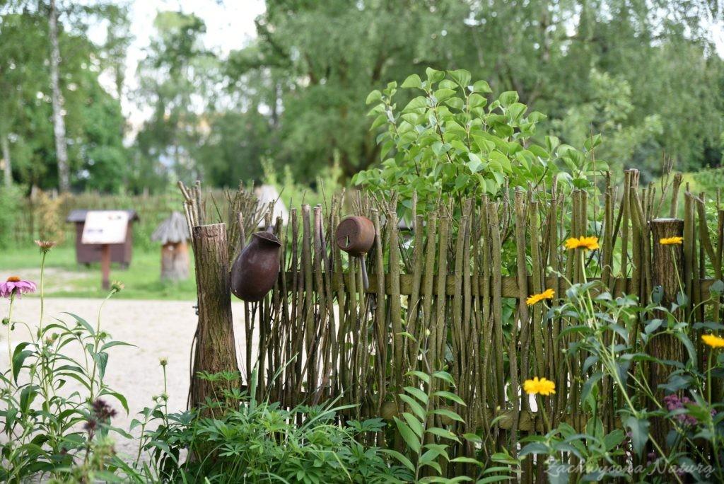 Ogródek przydomowy w skansenie w Łódzkim Ogrodzie Botanicznym (16)