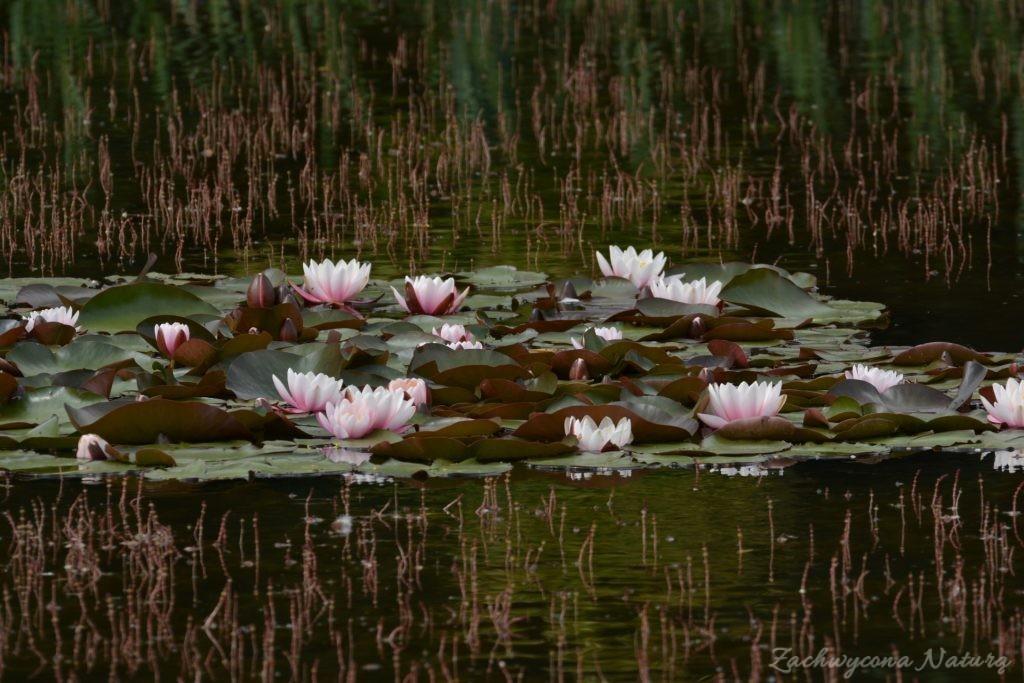 Stawy w Łódzkim Ogrodzie botanicznym (4)
