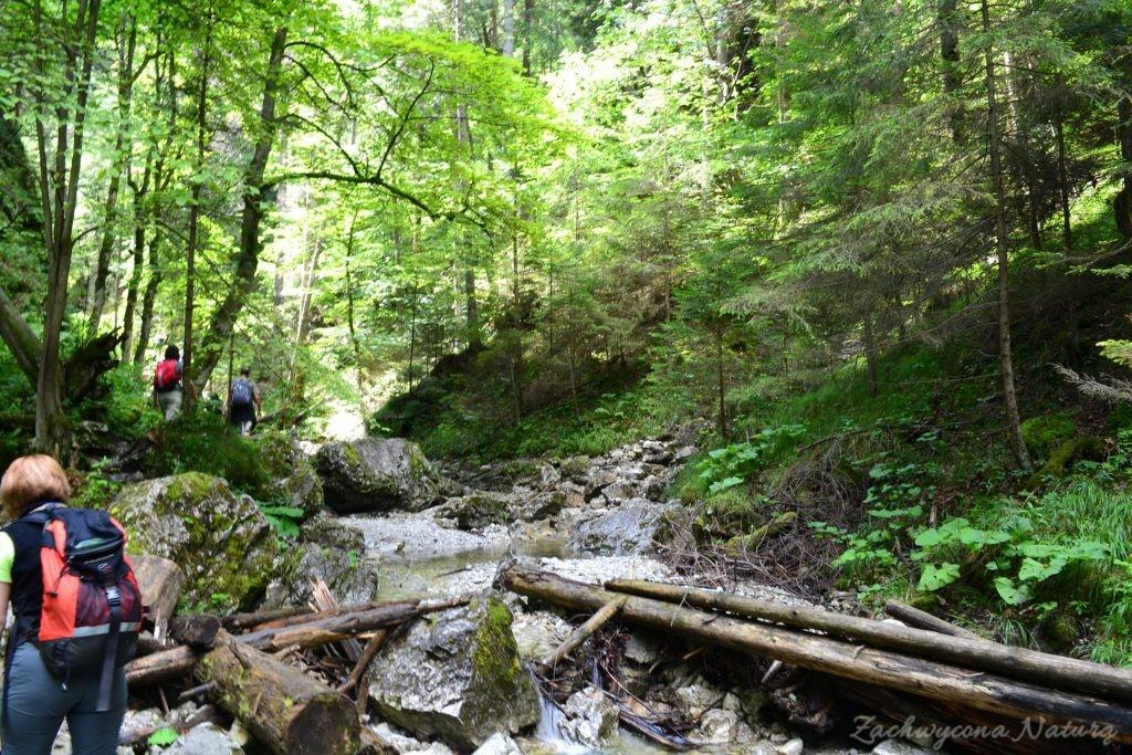 Wąwóz Sucha Bela w Słowackim Raju (11)