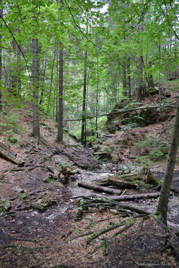 Wąwóz Sucha Bela w Słowackim Raju (25)
