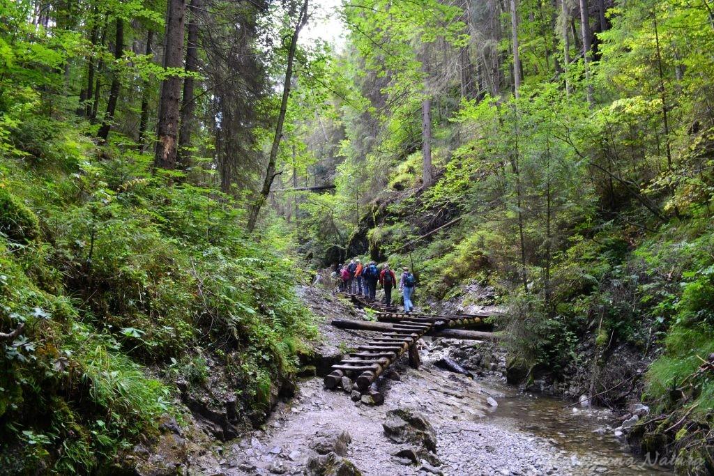 Wąwóz Sucha Bela w Słowackim Raju (4)