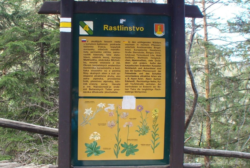 W drodze do Jaskini Bielińskiej w Tatrach Bielskich (6)