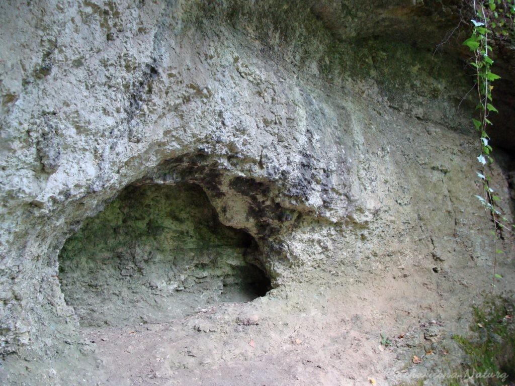 Bluszcz w rezerwacie Zimny Dół (18)