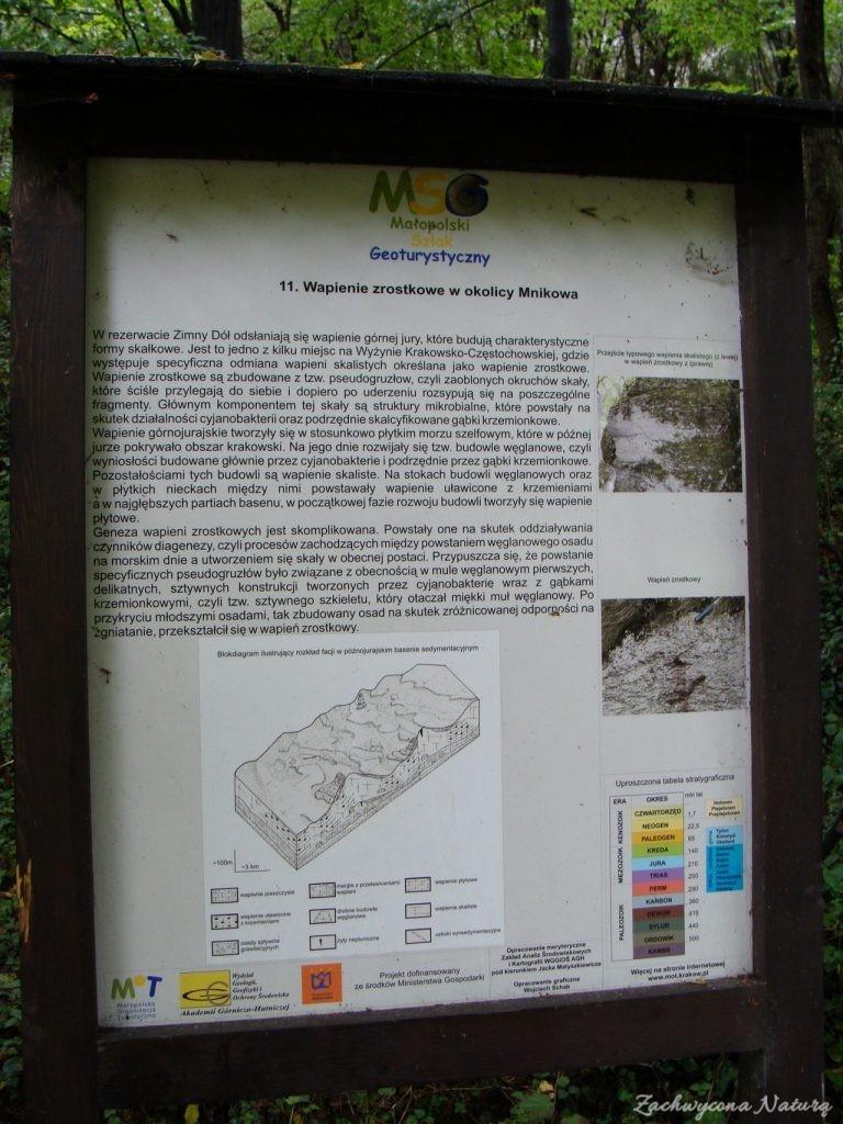 Bluszcz w rezerwacie Zimny Dół (8)
