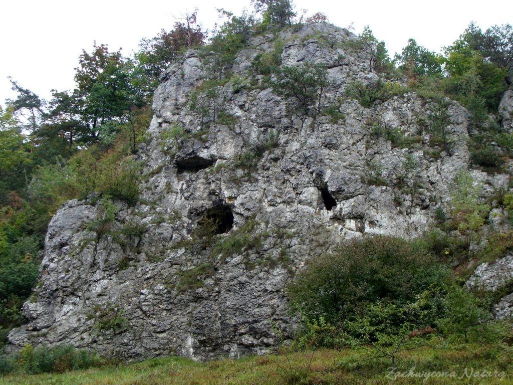 Dolinki Krakowskie - Wąwóz Bolechowicki (10)