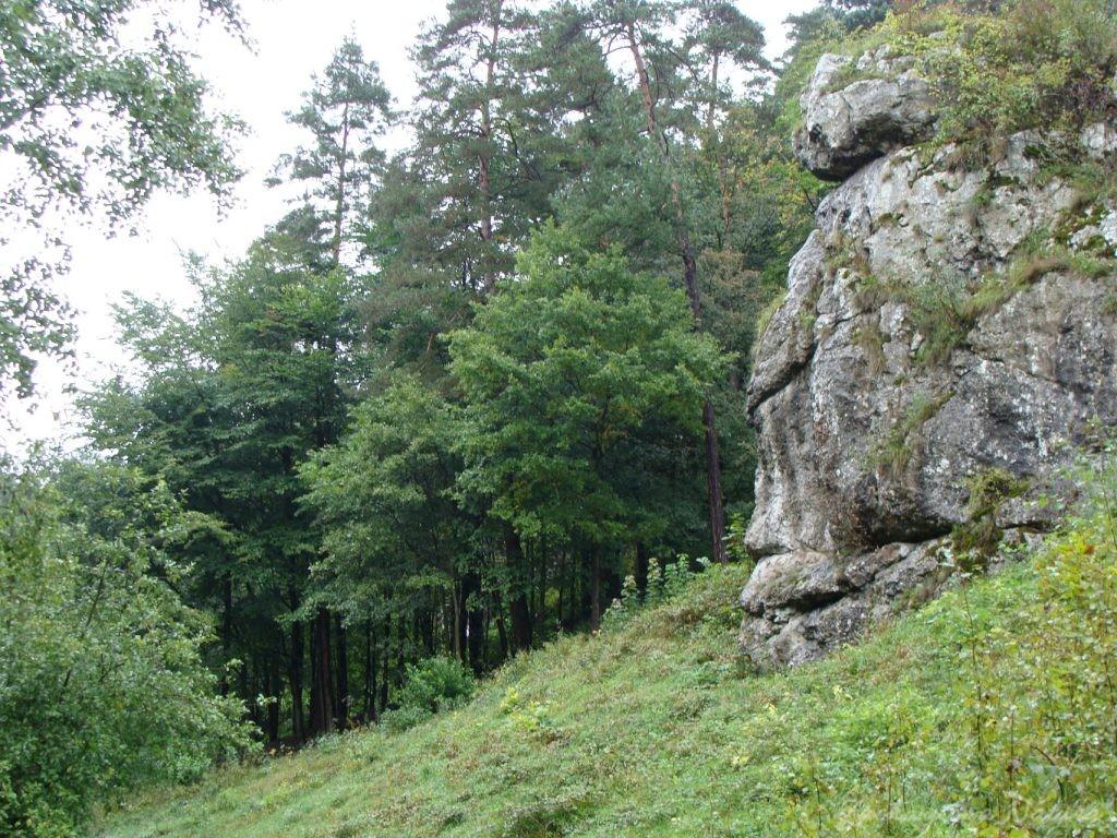 Dolinki Krakowskie - Wąwóz Bolechowicki (11)