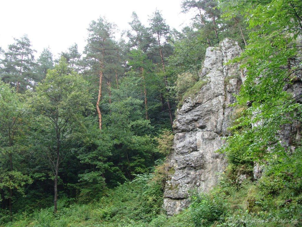 Dolinki Krakowskie - Wąwóz Bolechowicki (12)