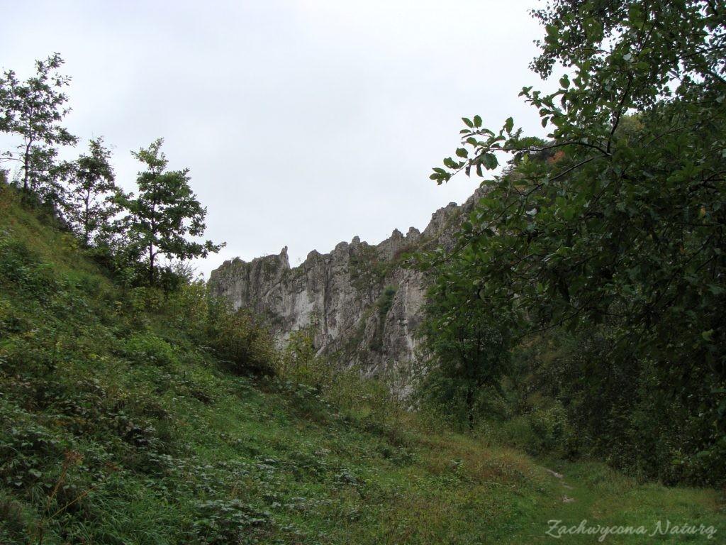 Dolinki Krakowskie - Wąwóz Bolechowicki (16)