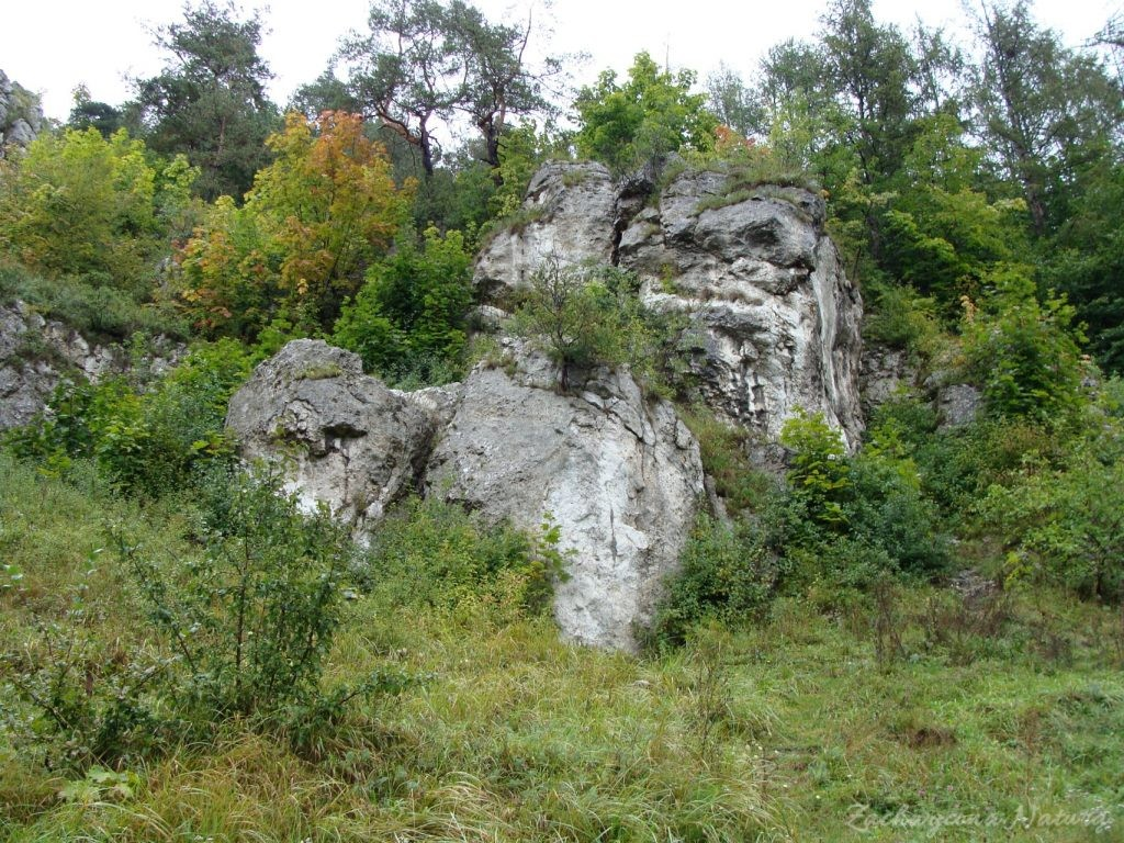 Dolinki Krakowskie - Wąwóz Bolechowicki (19)