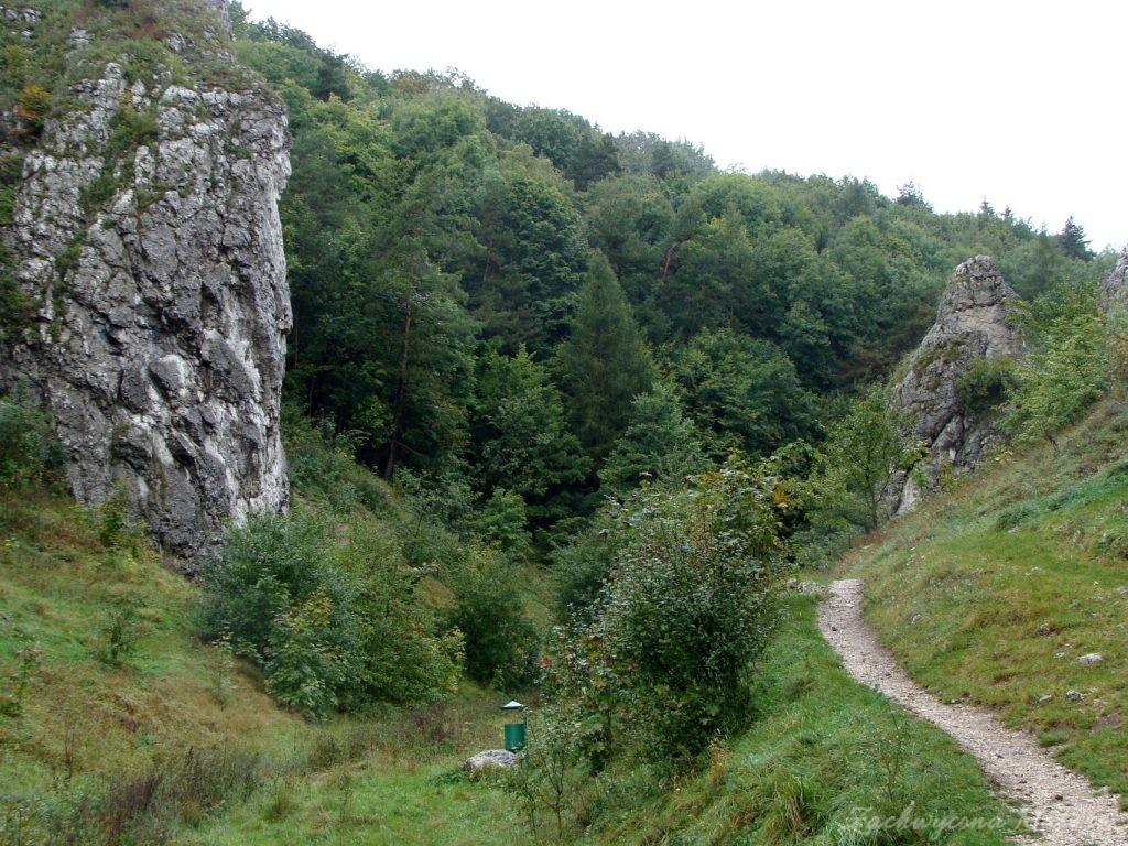 Dolinki Krakowskie - Wąwóz Bolechowicki (4)