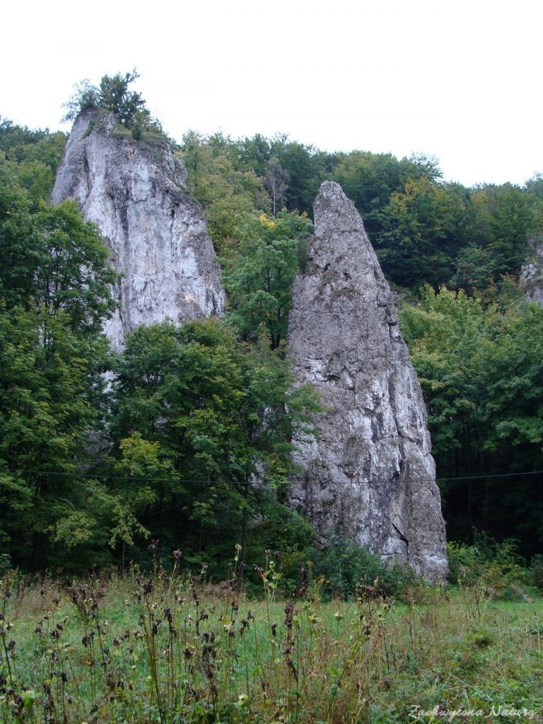Jurajska Dolina Będkowska (18)