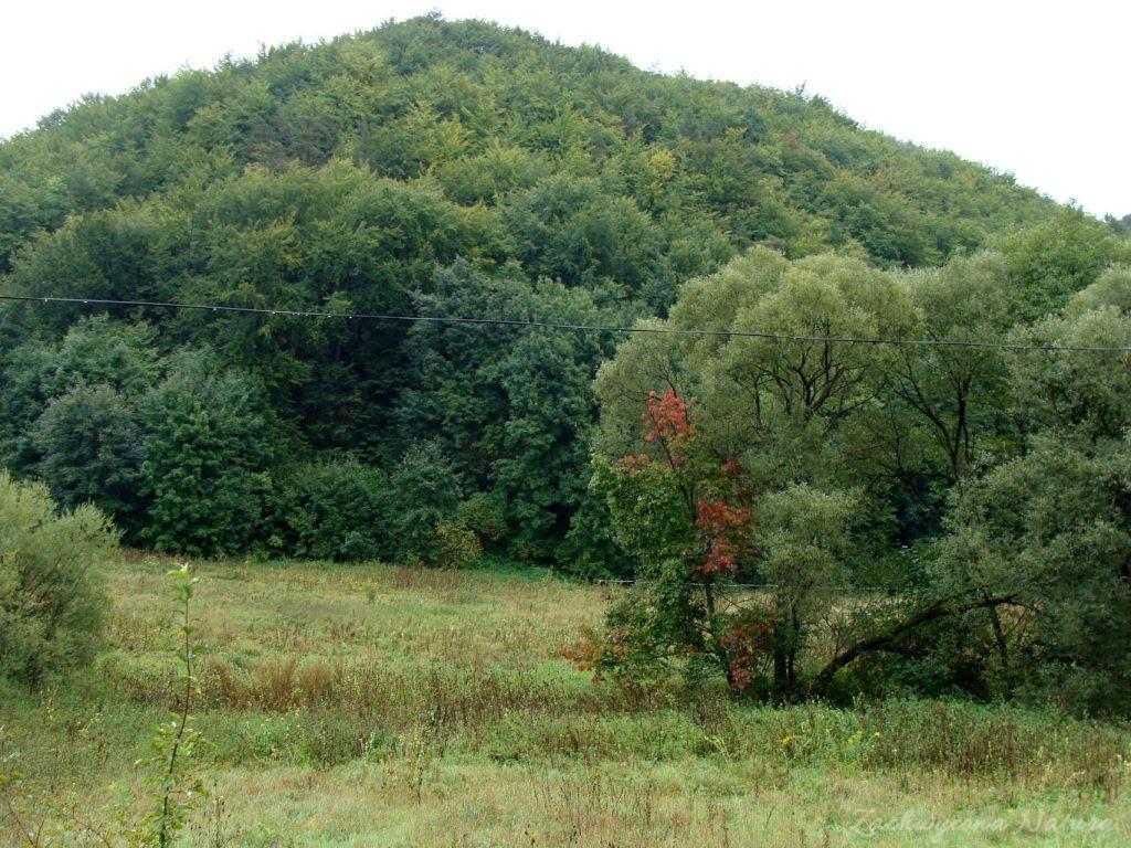 Jurajska Dolina Będkowska (3)