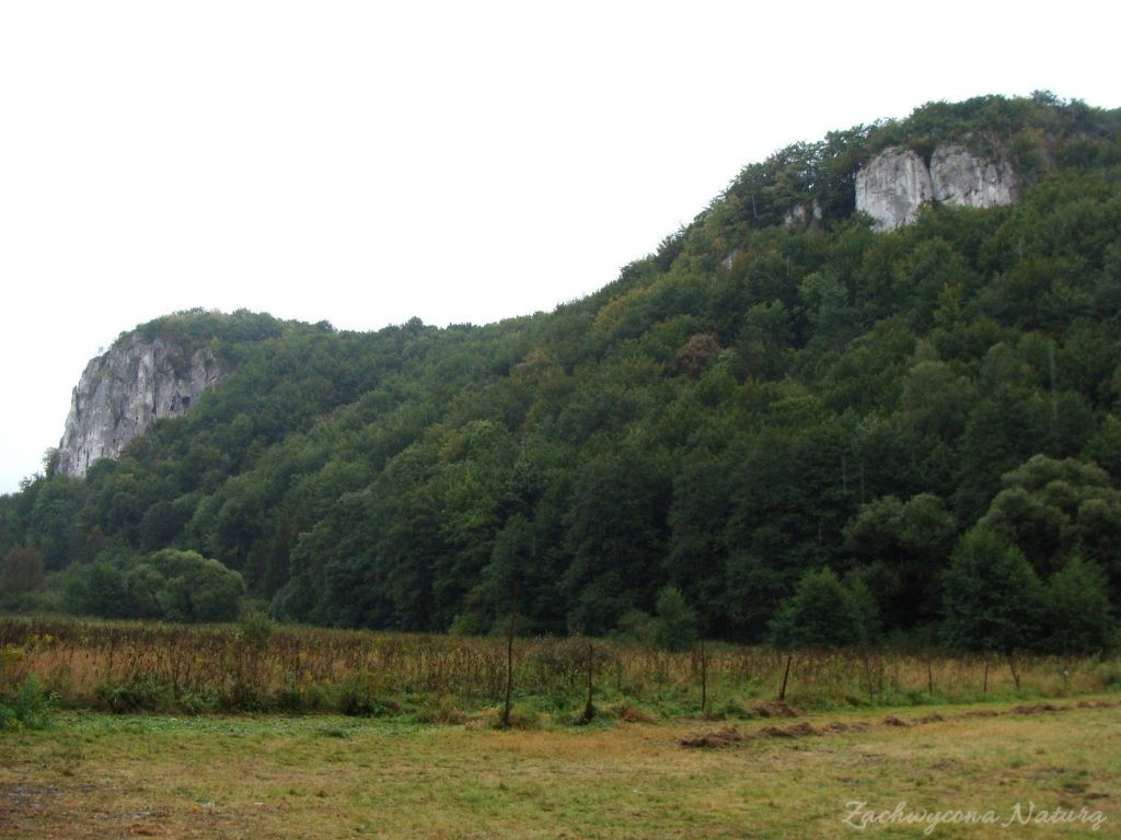 Jurajska Dolina Będkowska (6)