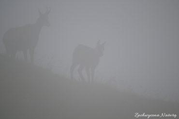 Kozice we mgle (4)