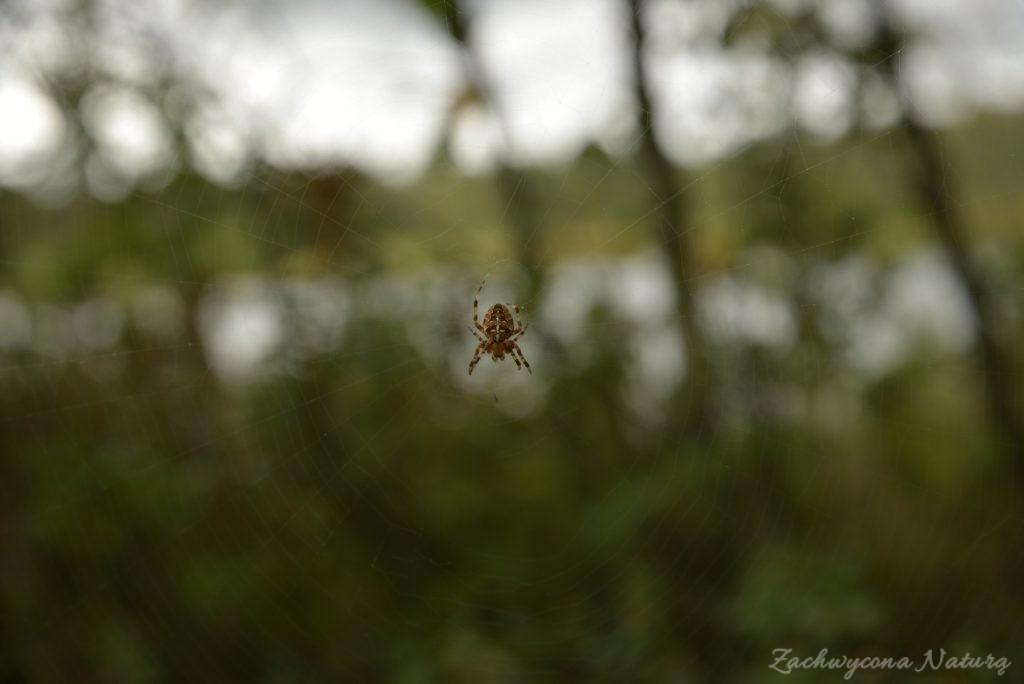 Na pajęczych nitkach odlatuje lato.. (3)