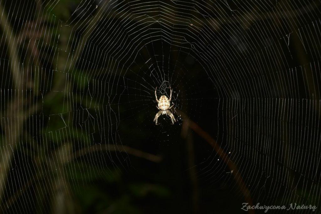 Na pajęczych nitkach odlatuje lato.. (4)