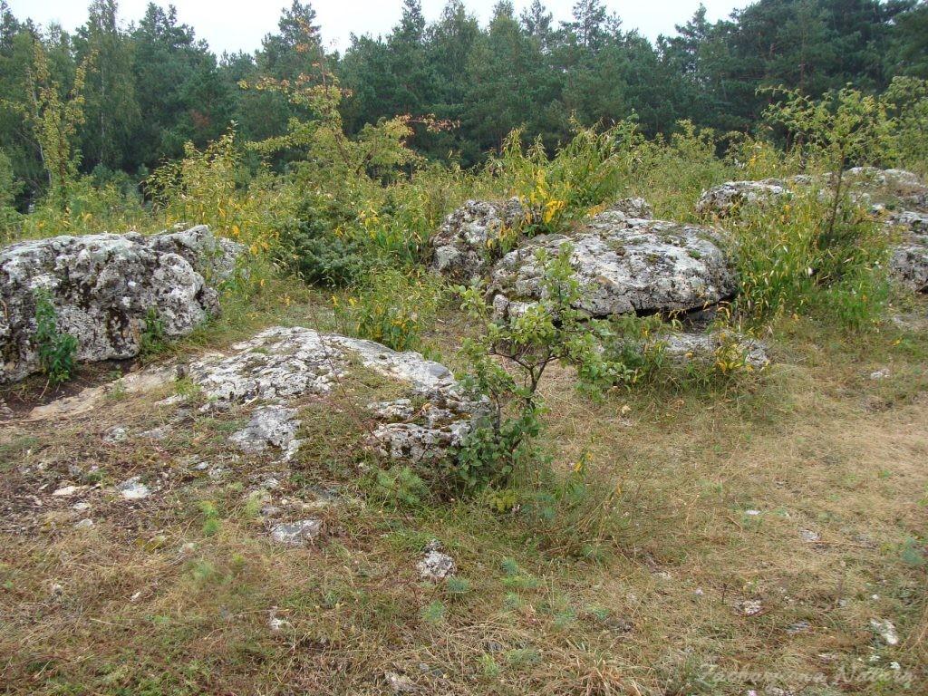 Późnosierpniowy Załęczański Park Krajobrazowy (15)