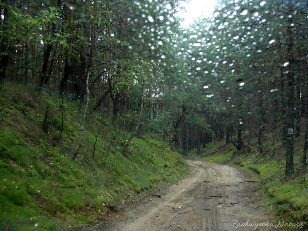 Widok zza szyb samochodu jadąc przez mini-wąwóz w lesie
