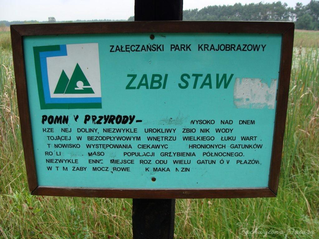 Późnosierpniowy Załęczański Park Krajobrazowy (38)
