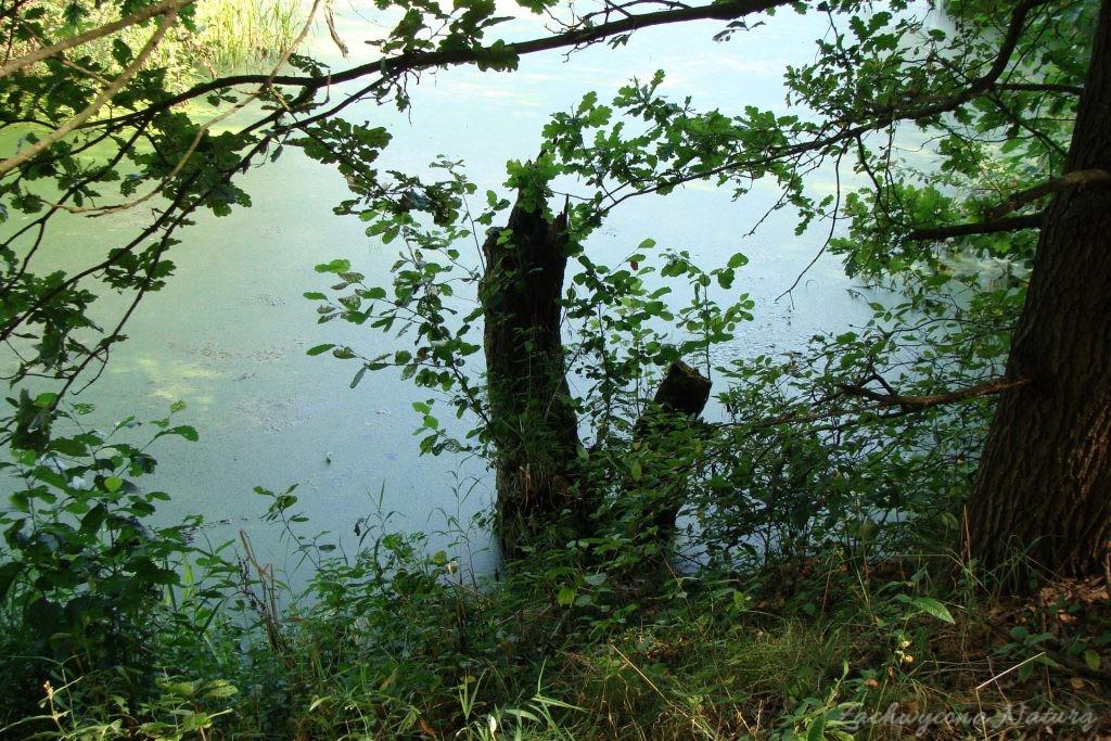 Późnosierpniowy Załęczański Park Krajobrazowy (52)