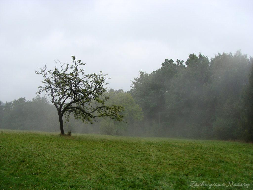 Wrześniowy Ojcowski Park Narodowy (51)