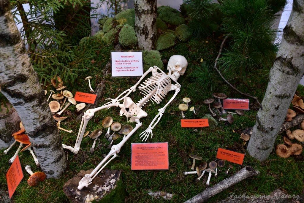 Wystawa grzybów w łódzkim Ogrodzie Botanicznym 2017 (109)