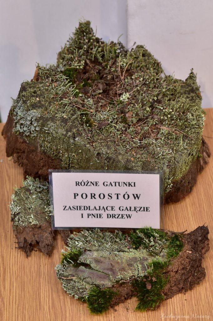 Wystawa grzybów w łódzkim Ogrodzie Botanicznym 2017 (116)