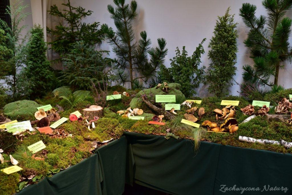 Wystawa grzybów w łódzkim Ogrodzie Botanicznym 2017 (126)