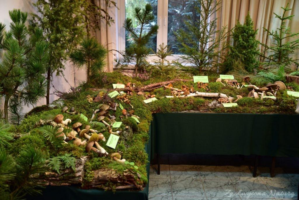 Wystawa grzybów w łódzkim Ogrodzie Botanicznym 2017 (128)