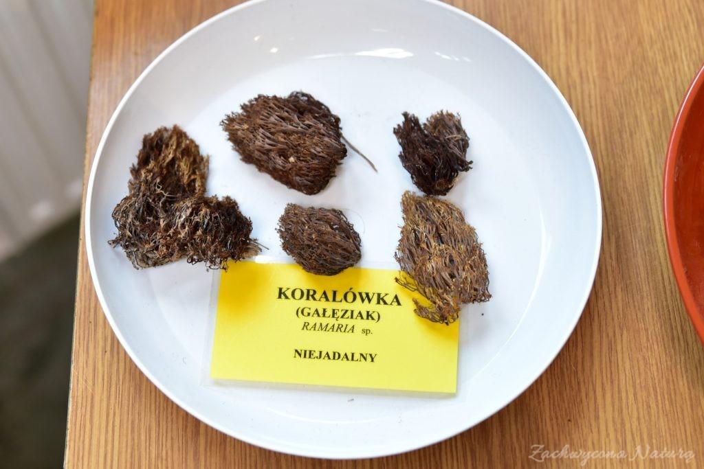 Wystawa grzybów w łódzkim Ogrodzie Botanicznym 2017 (17)