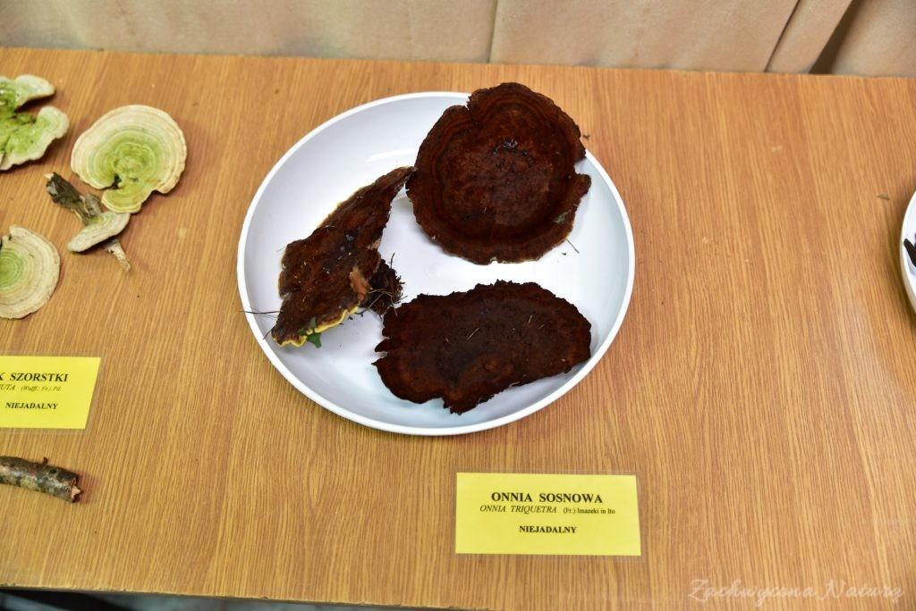 Wystawa grzybów w łódzkim Ogrodzie Botanicznym 2017 (19)
