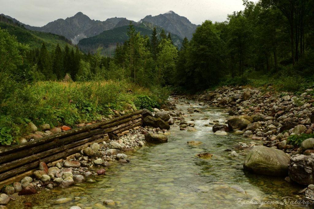 Sierpniowa Polana pod Muraniem w Tatrach Bielskich (23)