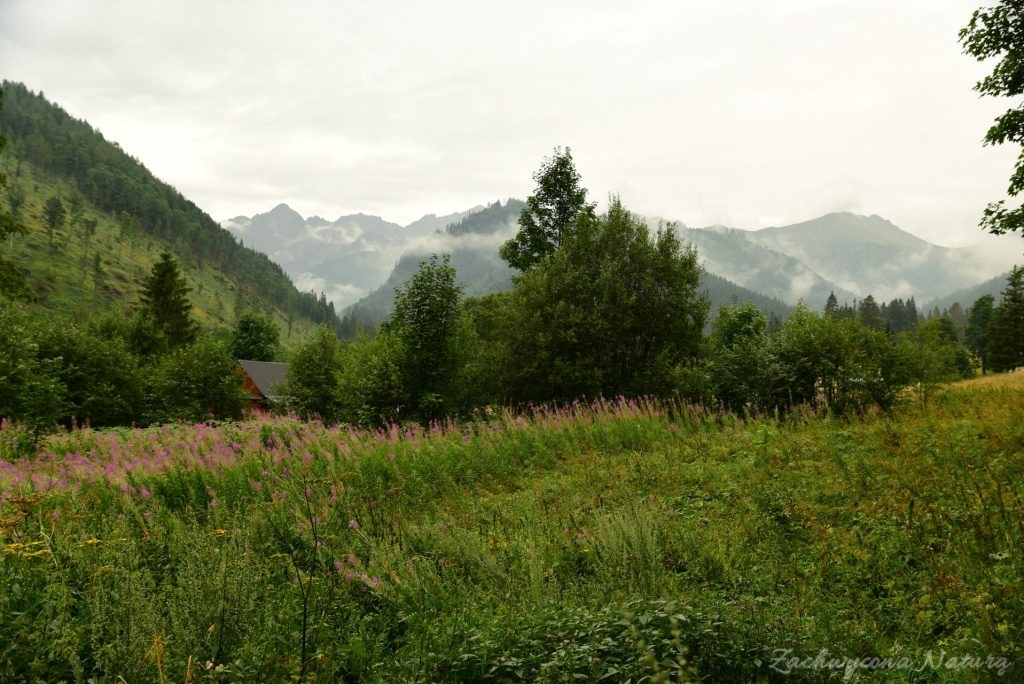Sierpniowa Polana pod Muraniem w Tatrach Bielskich (3)