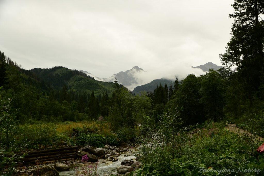 Sierpniowa Polana pod Muraniem w Tatrach Bielskich (8)