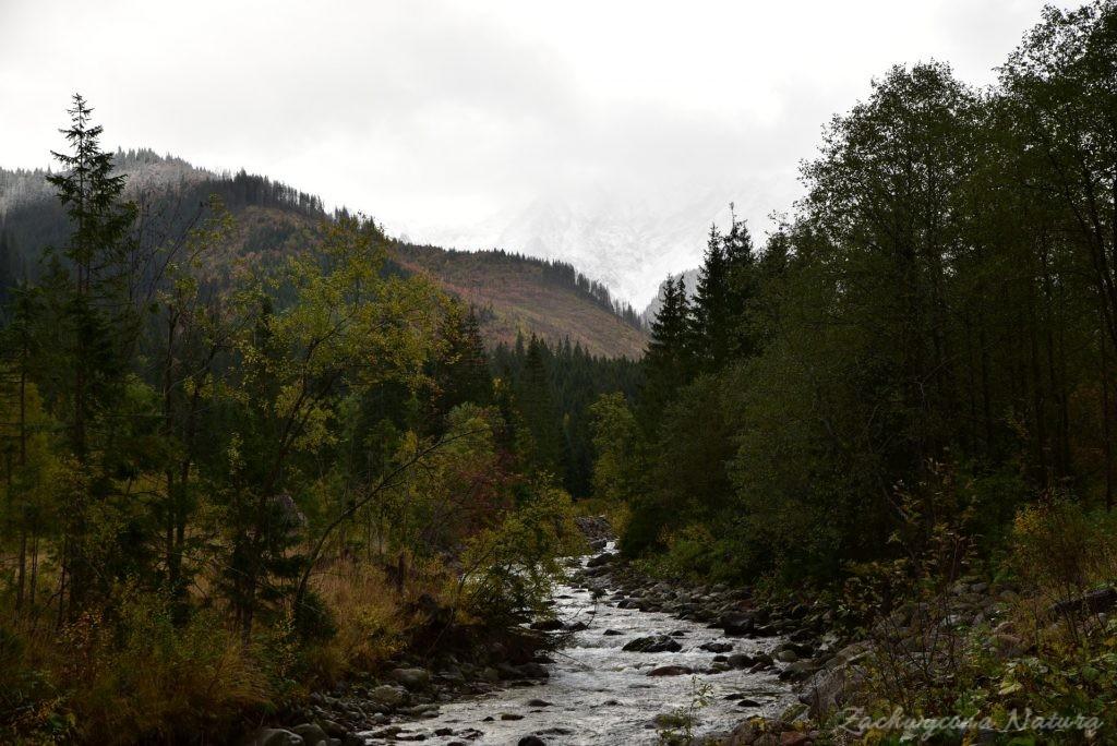 W poszukiwaniu jesieni, (a może zimy) w Tatrach Bielskich - tym razem dotarliśmy do Szerokiej Przełęczy (1)