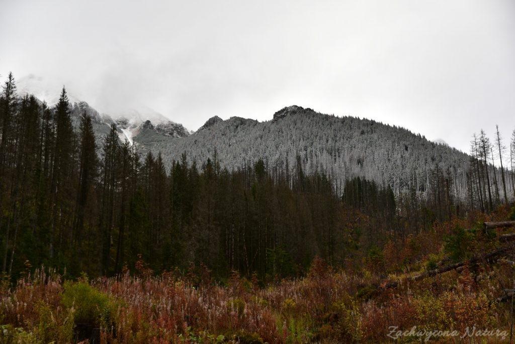 W poszukiwaniu jesieni, (a może zimy) w Tatrach Bielskich - tym razem dotarliśmy do Szerokiej Przełęczy (13)